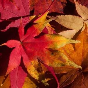 Autumn 200293 1920 300×300
