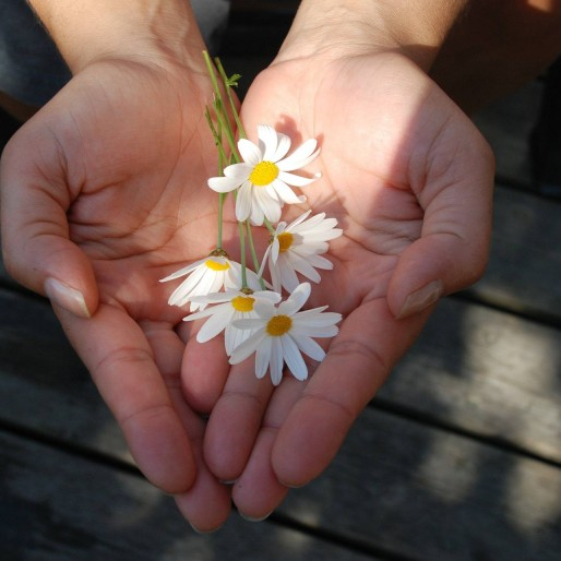 Rostliny Kopretiny 514×514